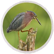 Hunting Green Heron Round Beach Towel