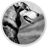 Husky Portrait Round Beach Towel