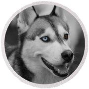 Round Beach Towel featuring the photograph Husky Portrait by Vicki Spindler