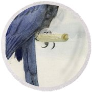 Hyacinth Macaw Round Beach Towel