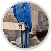 Hyacinth Macaw Parrot Bird Art Prints Round Beach Towel