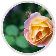 Round Beach Towel featuring the photograph Hybrid Tea Rose by Matt Malloy