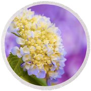 Hydrangea On Purple Round Beach Towel