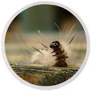I Am A Caterpillar Round Beach Towel
