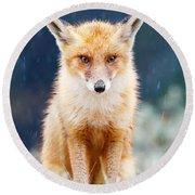 I Can't Stand The Rain  Fox In A Rain Shower Round Beach Towel
