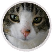I See You Cat Round Beach Towel by Kent Lorentzen