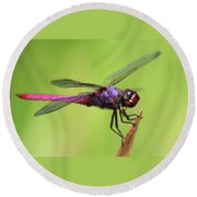 Dragonfly - I See You Round Beach Towel