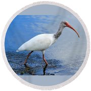 Ibis Visitor Round Beach Towel
