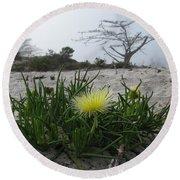 Iceplant Bloom On Carmel Dunes Round Beach Towel