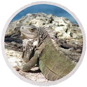 Iguana In The Sun Round Beach Towel