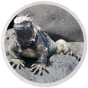 Iguana Or Prehistory Survivor Round Beach Towel