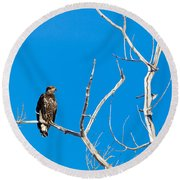 Round Beach Towel featuring the photograph Immature Bald Eagle by Michael Chatt