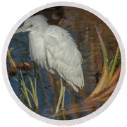 Immature Little Blue Heron Round Beach Towel