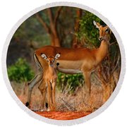 Impala And Young Round Beach Towel