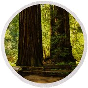 Impressions Of Muir Woods California Round Beach Towel