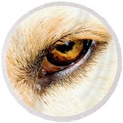 Round Beach Towel featuring the photograph In The Eyes.... by Rod Wiens