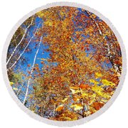 In The Forest At Fall Round Beach Towel