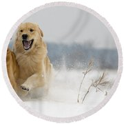 In Their Element Round Beach Towel