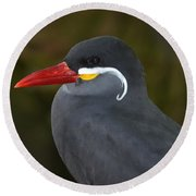 Inca Tern  Round Beach Towel by Richard Bryce and Family