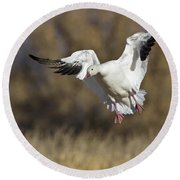 Round Beach Towel featuring the photograph Incoming Snow Goose by Bryan Keil