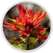 Indian Paintbrush Round Beach Towel by Belinda Greb