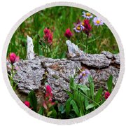 Round Beach Towel featuring the photograph Indian Paintbrush by Ronda Kimbrow