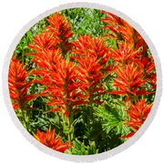 Indian Paintbrush Round Beach Towel by Sue Smith