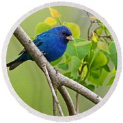 Blue Indigo Bunting Bird  Round Beach Towel
