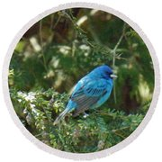Indigo Bunting Visit Round Beach Towel by Brenda Brown