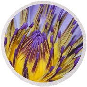 Round Beach Towel featuring the photograph Inner Sanctum by Judy Whitton
