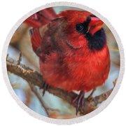 Inquisitive Cardinal Round Beach Towel