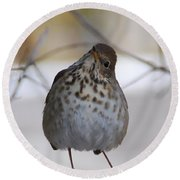 Inquisitive Hermit Thrush Round Beach Towel