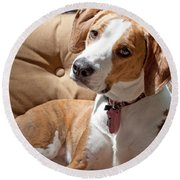Round Beach Towel featuring the photograph Inquisitive by Jean Haynes