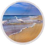 Inspiring Ibis Egret Sandpiper Starfish Sand Dollars  Round Beach Towel