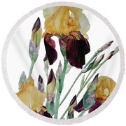 Watercolor Of Tall Bearded Iris In Yellow And Maroon I Call Iris Beethoven Round Beach Towel
