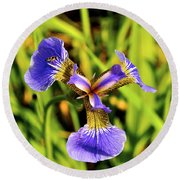 Round Beach Towel featuring the photograph Iris by Cathy Mahnke