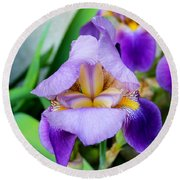 Iris From The Garden Round Beach Towel