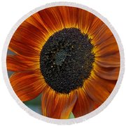 Round Beach Towel featuring the photograph Isabella Sun by Joseph Yarbrough