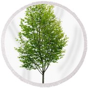 Isolated Young Tree Round Beach Towel