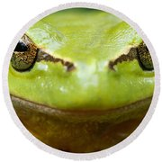 It's Not Easy Being Green _ Tree Frog Portrait Round Beach Towel by Roeselien Raimond