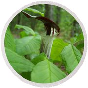 Jack In The Pulpit Round Beach Towel