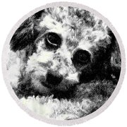 Jack Round Beach Towel by Lenore Senior