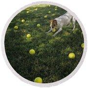 Jack Russell Terrier Tennis Balls Round Beach Towel