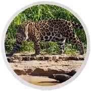 Jaguar River Walk Round Beach Towel