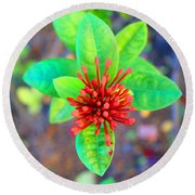 Jamaican Ixora Flower Round Beach Towel