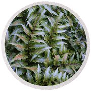 Round Beach Towel featuring the photograph Japanese Ferns by Kathryn Meyer