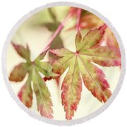 Japanese Maple Round Beach Towel by Caitlyn  Grasso