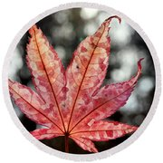Japanese Maple Leaf - 2 Round Beach Towel by Kenny Glotfelty