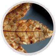 Japanese Maple Leaf Brown - 1 Round Beach Towel