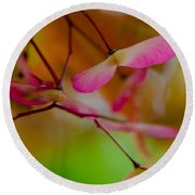 Japanese Maple Seedling Round Beach Towel